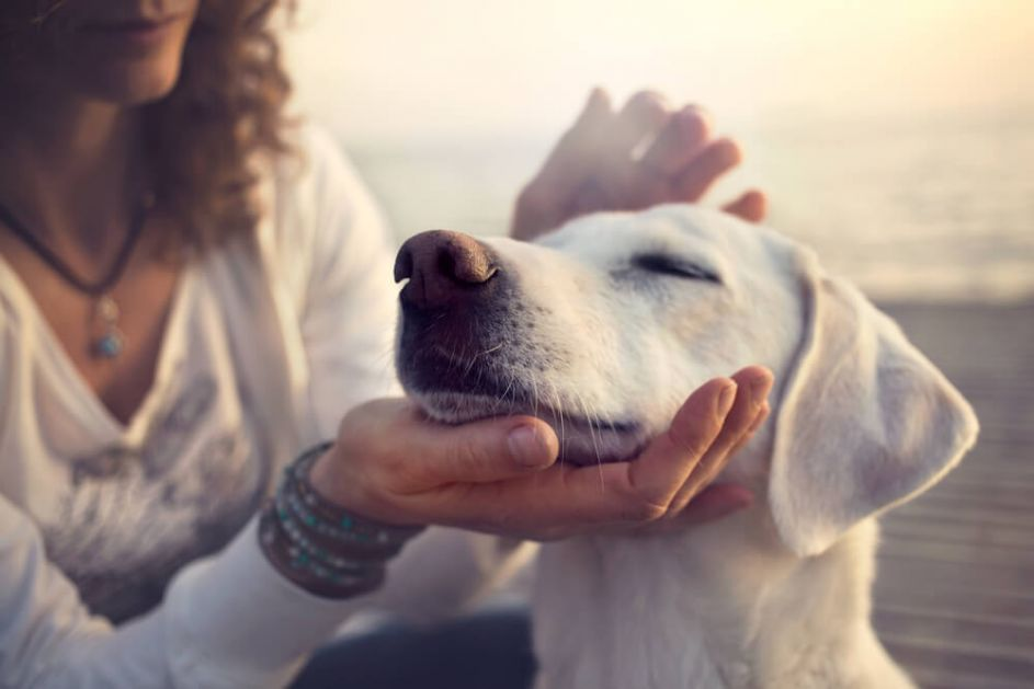 Pet rasa pasa koji imaju naslađe štence