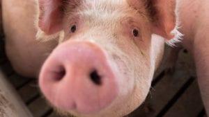 Peticija za uvođenje istorije životinja u školske programe