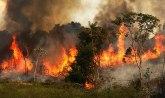 Pluća planete u plamenu: To mogu biti kriminalne akcije NVO, to je rat VIDEO