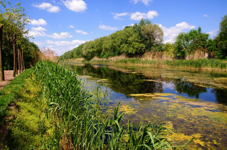 Poboljšan kvalitet vode na kanalu kod Srbobrana, uzroci nisu otklonjeni