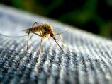 Počinje zaprašivanje komaraca i krpelja u Nišu