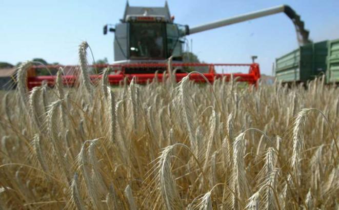 Podrška od pet feninga za pšenicu ogromna za farmere