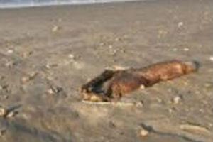 Pojavilo se misteriozno stvorenje nakon uragana /FOTO