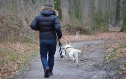 Pokrenuta kampanja - zabraniti električne ogrlice za pse