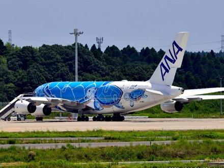 Poletanje pet aviona odloženo zbog KORNJAČE (FOTO)
