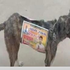 Politički kandidati koriste pse lutalice kao hodajuće reklame, aktivisti POBESNELI! (VIDEO)