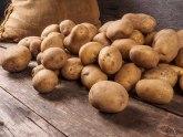 Pomoć proizvođačima iz Ivanjice: Tate Novosađani otkupili 13 tona krompira VIDEO
