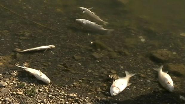 Pomor ribe u Velikom bačkom kanalu, čekaju se analize