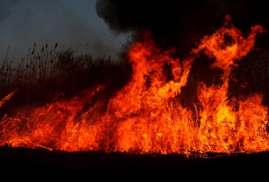 Ponovo požar na Fruškoj Gori: Buktinja u blizini Manastira Rakovac (VIDEO)