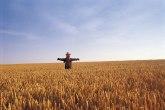 Poseban fond za mlade: Država pomaže pri kupovini zemljišta