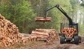Posečena rekordna količina: Da li je drvo novo zlato?