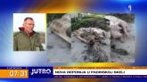 Posle pilećih nogica u Surčinu: U Padinskoj skeli se pojavile uginule svinje VIDEO
