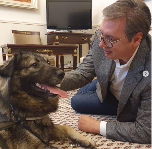 Posle teške epizode na VMA Vučića u kabinetu dočekao šarplaninac Pak, poklon patrijarha Irineja
