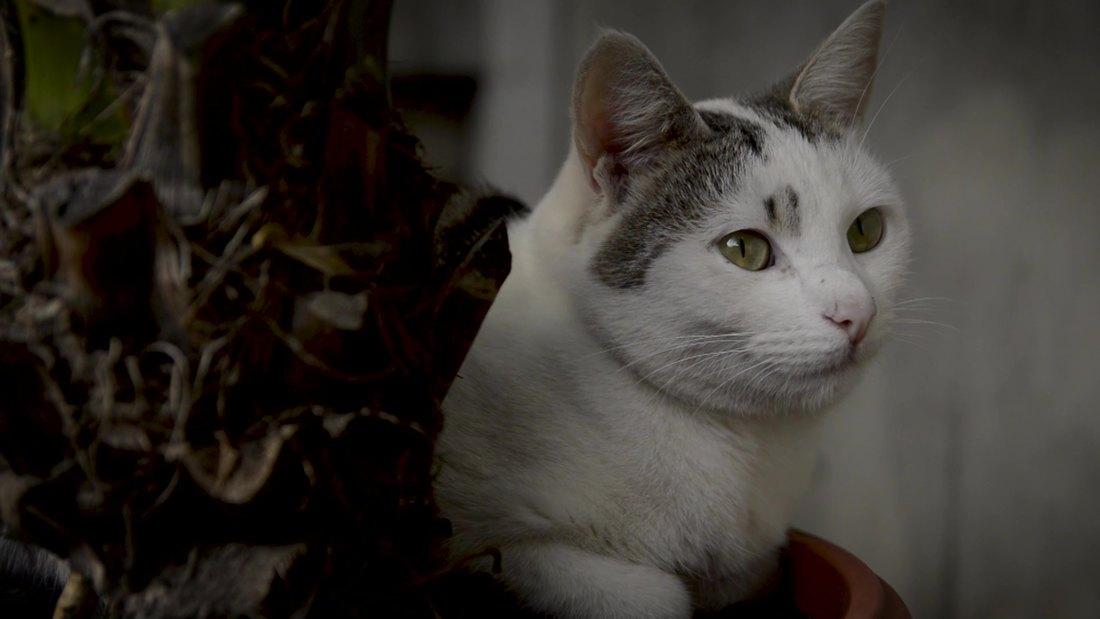 Posle tri sedmice spasene životinje iz urušene zgrade u Rusiji