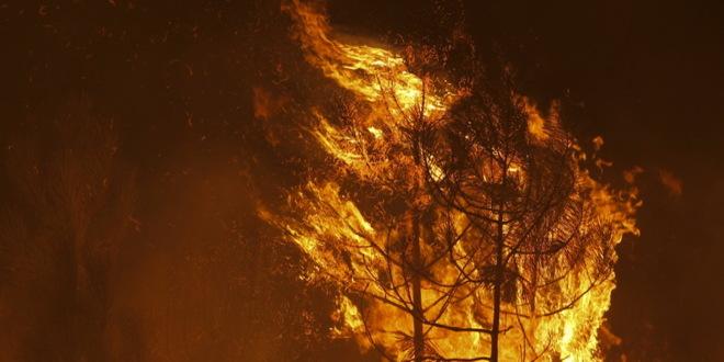 Posledice od šumskih požara osećaće se 20 godina
