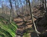 Pošumljavanje i novi šumski putevi na teritoriji Prokuplja