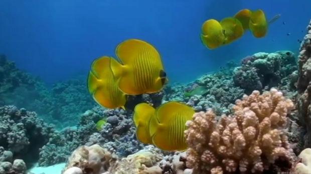Potreban oprez – kako se zaštiti od otrovnih riba u Jadranu i Mediteranu