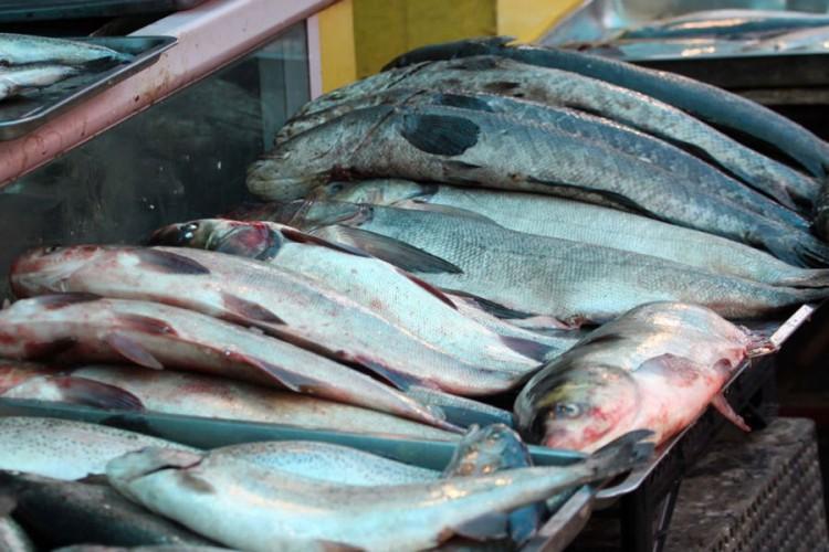 Povećan izvoz ribe iz BiH