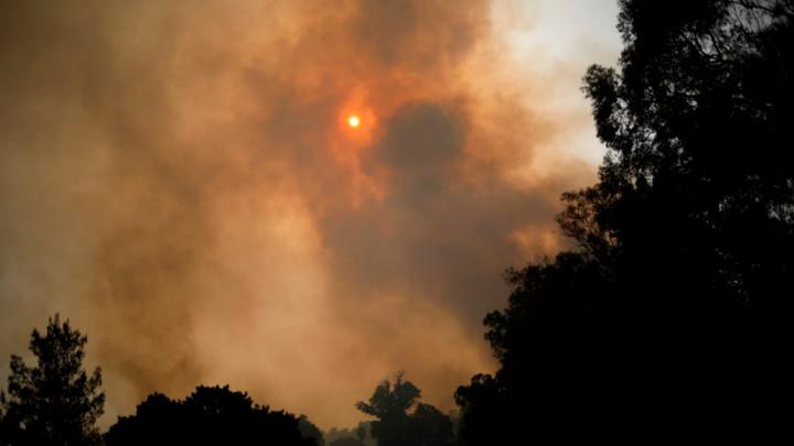 Požar na hrvatskoj plaži pod kontrolom! Noćas evakuisano 10.000 ljudi, vatru pogoršala jaka bura (FOTO)
