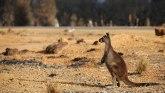 """Požari u Australiji: Apokalipsa"""" stigla na Ostrvo kengura"""