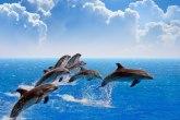 Predivan prizor: Više od 300 delfina u stampedu VIDEO
