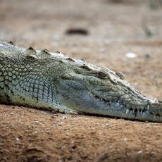 Prekršio je NAREDBU o karantinu da bi otišao na pecanje - pojeo ga je krokodil!