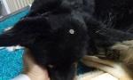 Preminula Kaja, pas kojem je dečak (12) zakucao ekser u glavu, a njen poslednji snimak će vas RASPLAKATI (VIDEO)