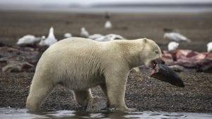 Princ ubio najvećeg medveda u Rumuniji