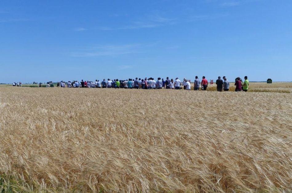 Prinos pšenice na severu Banata biće niži nego prethodne godine
