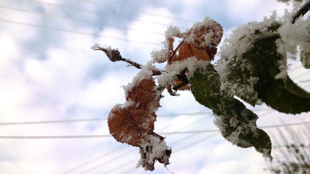 Prizemni mrazevi mogu nepovoljno uticati na povrtarske kulture