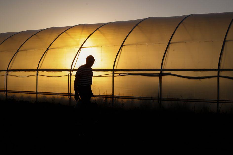 Problem sadnje povrća su niske temperature i manjak radne snage (AUDIO)