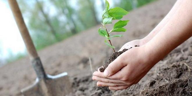 Projekat Školska šuma: Đaci posadili i brinu o 1. 000 mladica