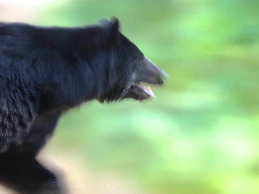 Prolaznici u banjalučkom naselju sreli medveda