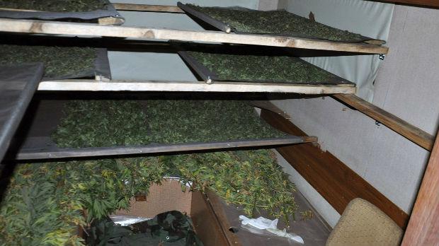 Pronađena sušara za marihuanu kod Iriga