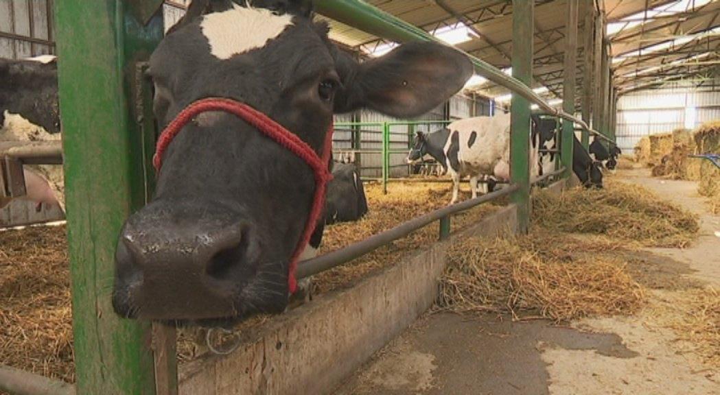 Prva krava plaćena bitkoinima u Crnoj Gori