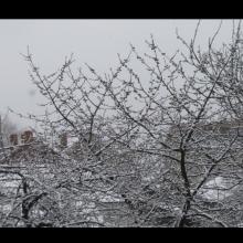 Prvoaprilski susret - tresnja i sneg (Kragujevac, 1. april 2020)