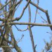 Ptice istrenirane da prikupljaju smeće u parku u Francuskoj