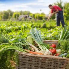 RASTE IZVOZ ORGANSKE HRANE IZ SRBIJE: Ministarstvo izdvaja ogromne svote za pomoć poljoprivrednicima