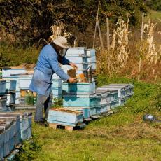 ROJ SMRTI: Muškarac umro od ujeda pčele, trojica preživela više od 100 uboda