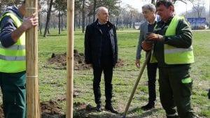 Radojičić: Od 2014. do danas posađeno oko 22.000 stabala