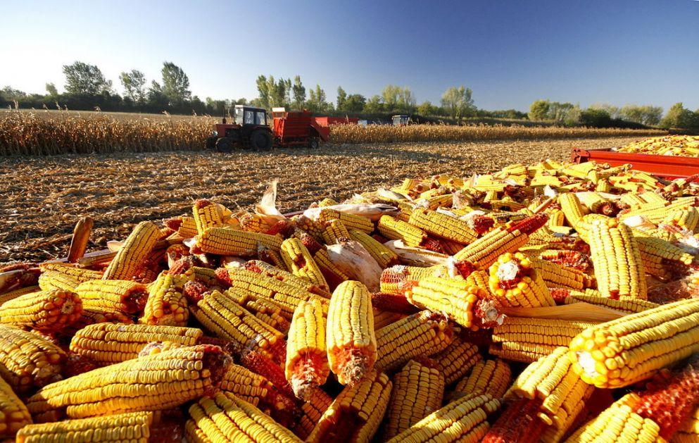 Rast cene kukuruza - pad cene soje