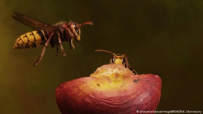 Rat insekata