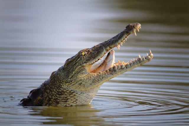 Reportaža pošla naopako: Krokodil napao novinarku VIDEO