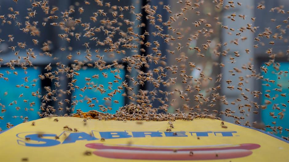 Roj od 40.000 pčela svratio na hot dog u Njujorku
