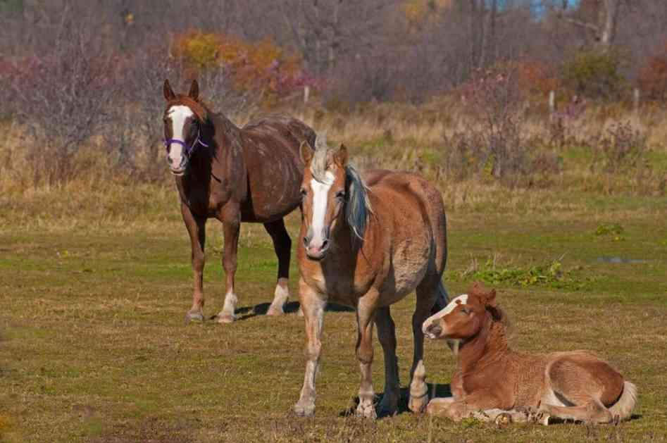 SATIMA TRAGAJU DA BI VIDELI NEVEROVATAN PRIZOR: Podno Cincara živi 600 divljih konja (VIDEO)