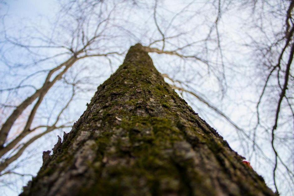 SEKAO DRVA, PA NASTRADAO: Stablo palo na glavu Skopljaka (27), lekar mogao samo da konstatuje smrt