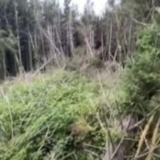 ŠETAO PSA U ŠUMI, PA SE SKAMENIO: Snimak sablasnog prizora i jeziv vrisak otkrivaju tajnu NLO (VIDEO)