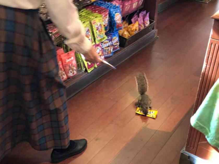 SLATKICA BEZOBRAZNA: Veverica ladno ušla u prodavnicu, izabrala šta joj treba i pobegla (VIDEO)