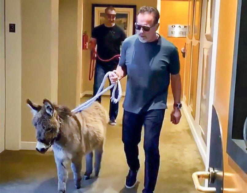 SLAVNI GLUMAC SVE IZNENADIO: Arnold Švarceneger doveo magarca na posao