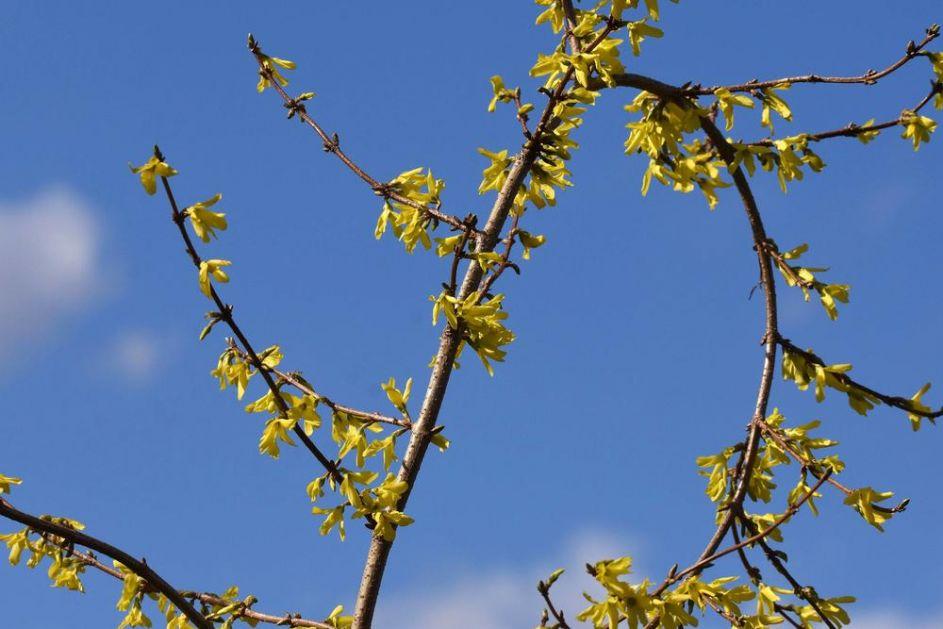 SNEG ZA SVETU PETKU?! NS meteorolog Čubrilo do detalja otkrio kakvo nas vreme očekuje i posle vikenda, ali i u novembru!